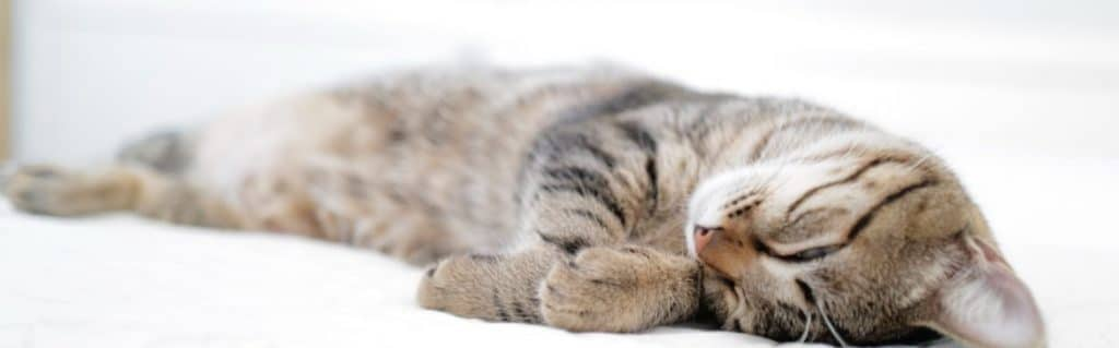 How Acupuncture Will Help You Sleep Better? - Laurelhurst Chiropractic